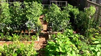 how to grow a lot of food in a small garden 9 ez tips