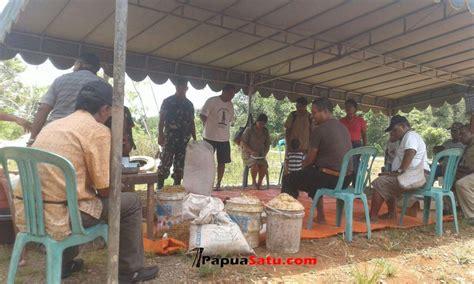 Fermentasi Pakan Ternak Babi babinsa sosialisasikan pembuatan fermentasi pakan ternak