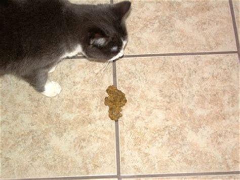 worms in vomit cat vomiting cat chit chat