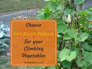 vegetables that climb on a trellis choose the right trellis for your climbing vegetables