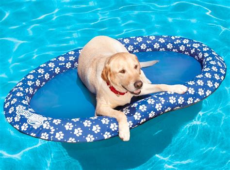 pool rafts for dogs pool float for dogs craziest gadgets