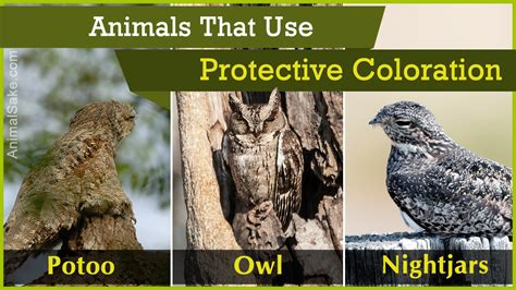 protective coloration list of animals that use protective coloration