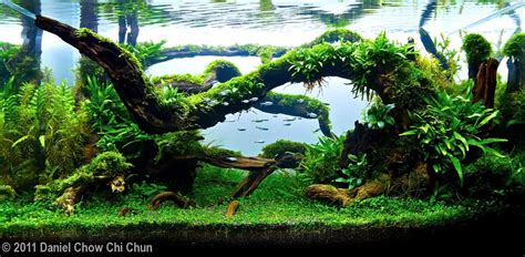 Aquascape Driftwood by 2011 Aga Aquascaping Contest 275