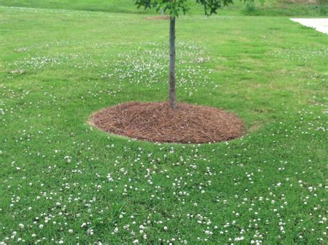 Landscape Edging Around Tree Roots Landscape Solutions For The Base Of Trees