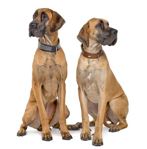 names for big dogs names for large dogs for the big breed