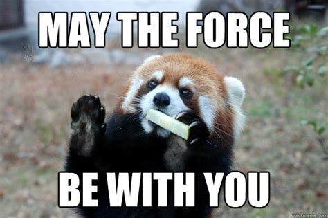 May The Force Be With You Meme - jedi red panda memes quickmeme
