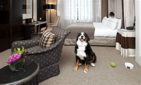 dog friendly hotels  cater  pets barkpost