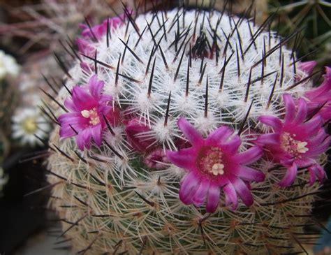 Tanaman Hias Jenis Kaktus Aneka Tanaman Hias Kaktus Mini Tanaman Hias Tanaman Hias
