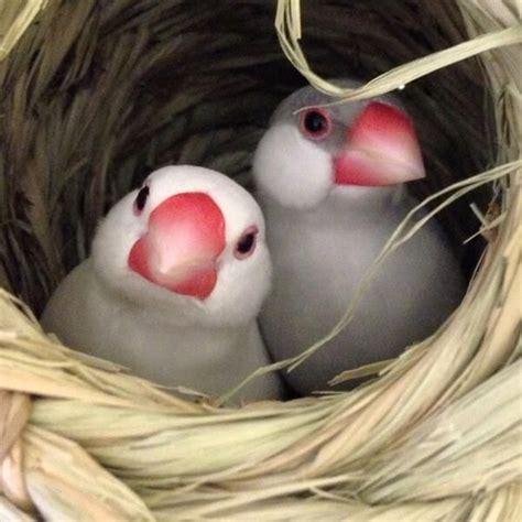 darling baby puffins scotland beautiful babies