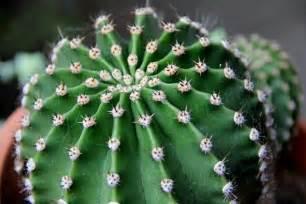 bulaklak decor cactus plants