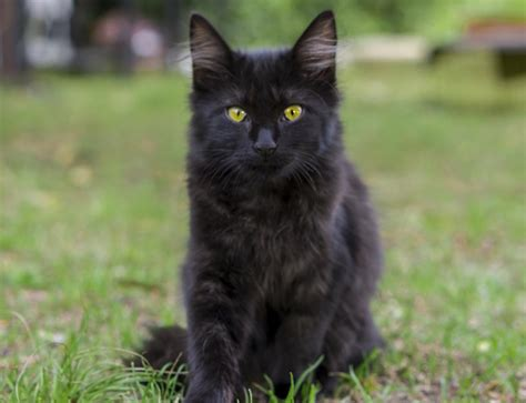 Awesome Names for Your Devilishly Handsome Black Cat