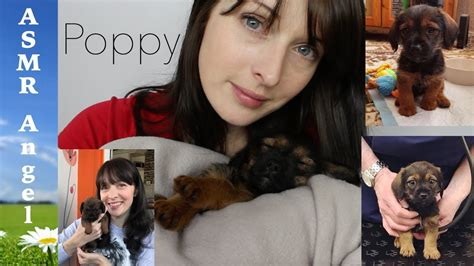 Introducing My New Puppy by Asmr Introducing My New Puppy Poppy