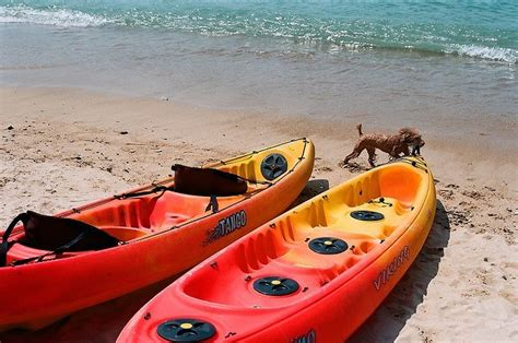 best kayak for dogs how to kayak with your 10 tips on kayaking with a