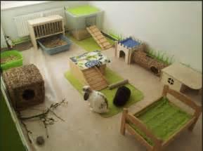 blue lapins nains une aire pour votre lapin