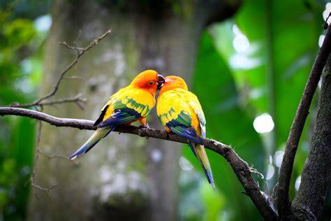 images of love birds hd wallpaper animal hd of love birds images 20 wallangsangit