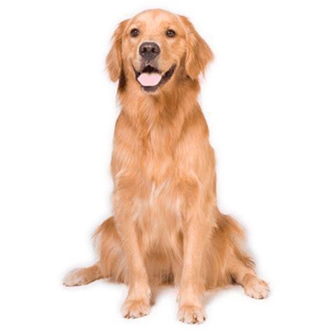 imagenes en png de animales perro png