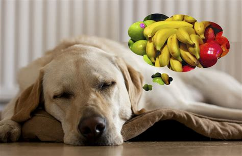 dogs and apples can dogs eat bananas and apples famlii
