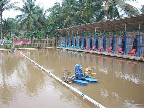 Pancing Makassar kolam pemancingan di makasar dan sekitarnya mancing