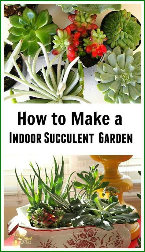 1000 Ideas About Indoor Succulent Garden On Pinterest How To Make A Succulent Planter