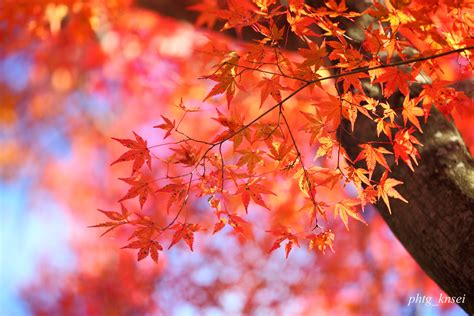 Autumn Pink wallpaper autumn pink picture gt gt gt best wallpaper hd