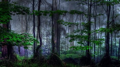 feel   ambient forest isochronic tones youtube