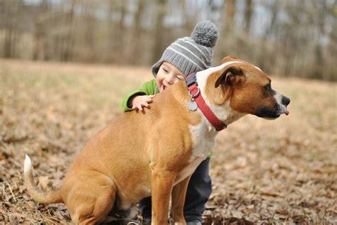 boy puppy baby boy friend humor hugs mood wallpaper 2048x1371 335827 wallpaperup