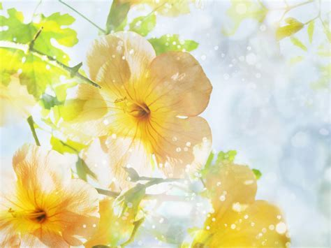 Android Phones Wallpapers: Android Wallpaper Jasmine Flower