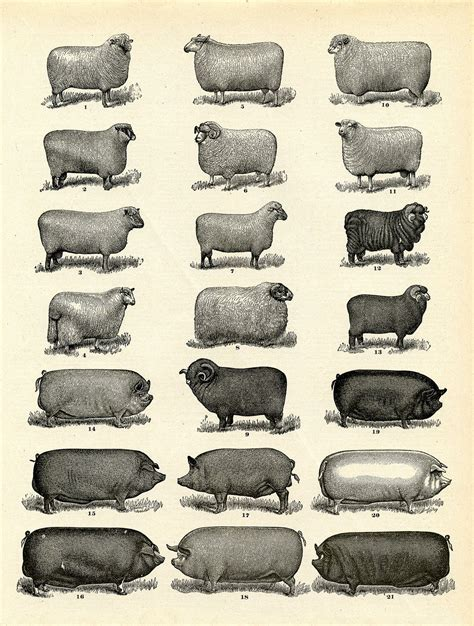 vintage printable animal vintge printable download farm animals instant art
