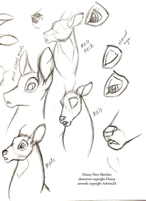 disney sketchbook sketchbook disney deer v1 by ashwin24 on deviantart