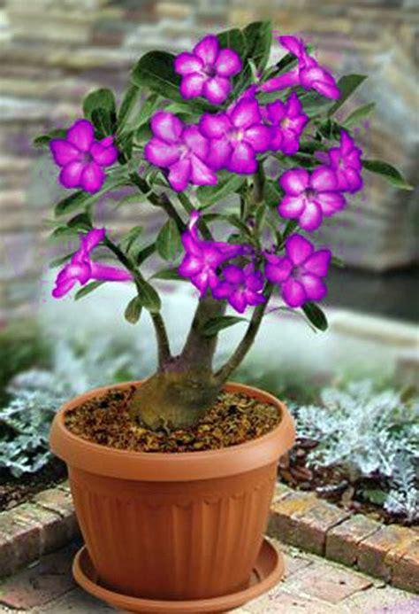 gambar tanaman hias bunga  namanya cat rumah minimalis