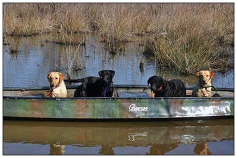 canoe puppies robert milner s duckhill kennels canoe labradors