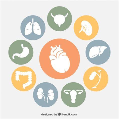 icone organi umani vettore gratis