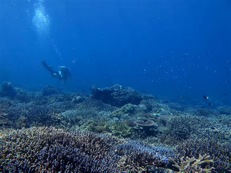 dive trip dive trips packages compass diving