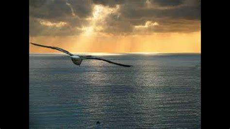 gabbiano al mare franco trabucco mare gabbiani tramonto