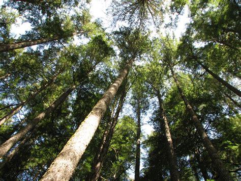 What Is A Forest Canopy What Is A Forest Canopy 28 Images Forest Subtropical