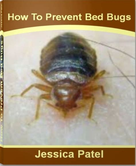 how to stop bed bugs from biting how to prevent bed bugs a definitive guide to show you