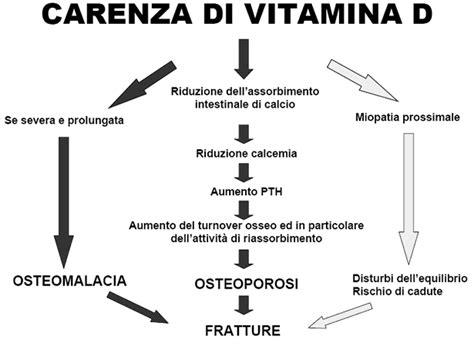 alimenti ricchi di vitamina d3 informazioni utili per un integrazione alimentare efficace