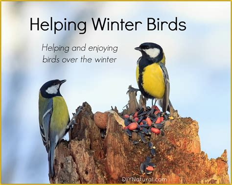 winter birds surprising ways to help local birds over winter