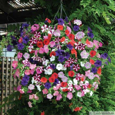 15 striking petunia centerpiece ideas for garden design