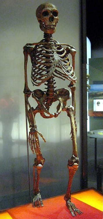 jawbone shows modern human  years