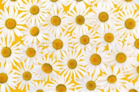 Interior Design Jobs From Home by Fresh Daisies Flower Heads Over Yellow Background