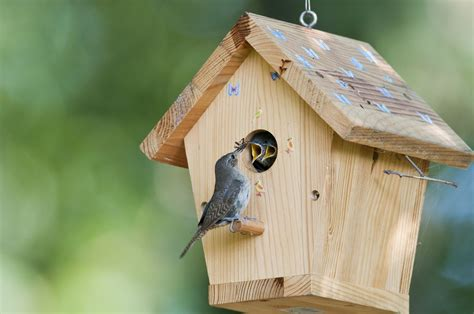 attract birds with shelter right in your backyard