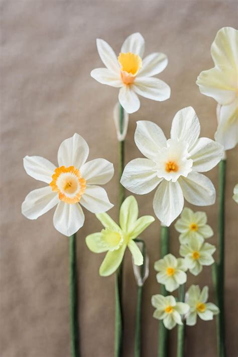 How To Make Paper Daffodils - 57 best beautiful photos of flowers vegetables images on