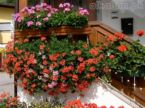 Balcony Flowers by File Manager Alkalam Pdf This Is The Sister