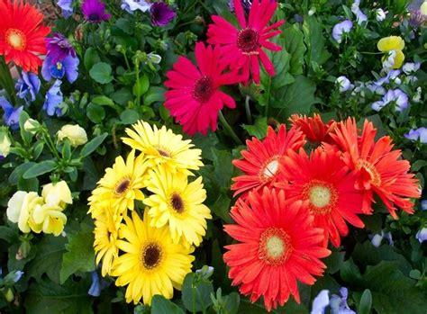fiori significati significato dei fiori significato fiori conoscere il