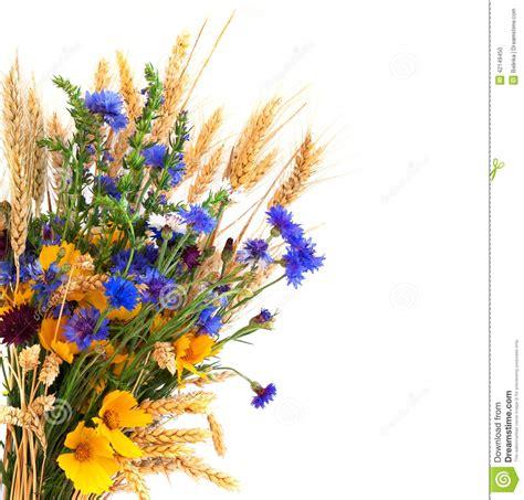 clipart photo bouquet des oreilles et des fleurs de ch d isolement