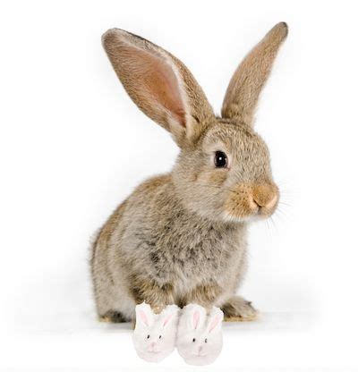 next bunny slippers bunny slippers warm the toes and the check out