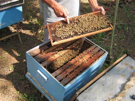 membuat rumah lebah madu ternak lebah madu labuselnews