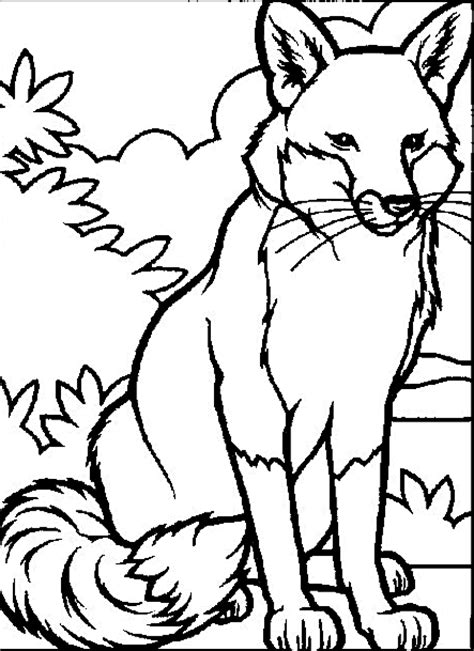 Wildlife Coloring Pages wildlife coloring pages for coloringpagesabc