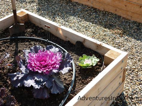 raised bed irrigation raised bed gardening ideas adventures in diy